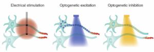 Representación esquemática de 2 células nerviosas en distintas fases de la estimulación optogenética, una en estado de optoexcitación y la otra en estado de optoinhibición